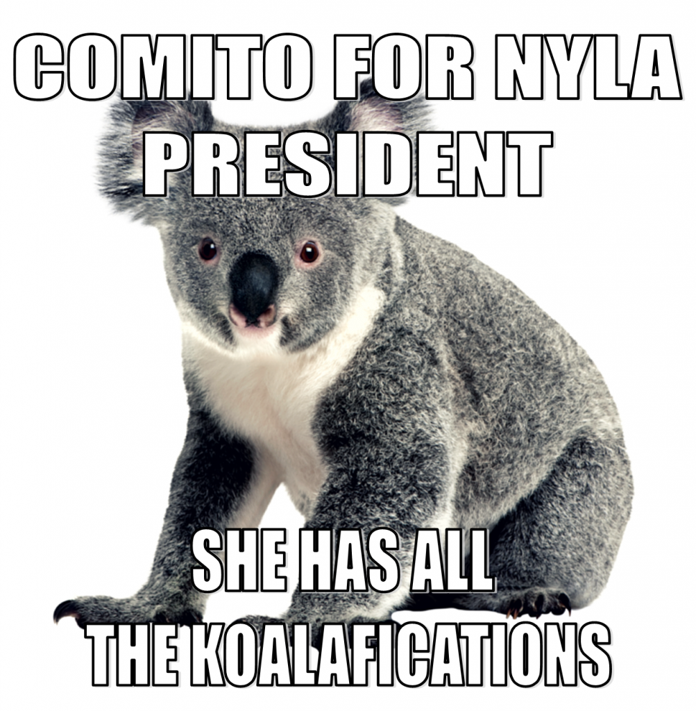 Comito for NYLA President - She has all of the koalafications, with photo of a koala